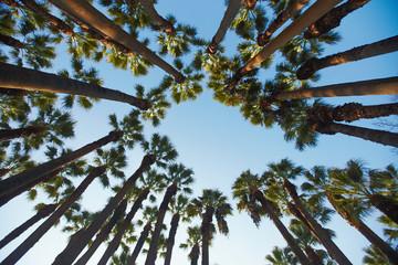 Palms around the sky downside view