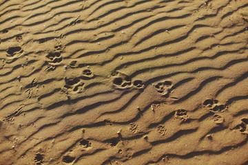 Paw prints of many anumals on sand