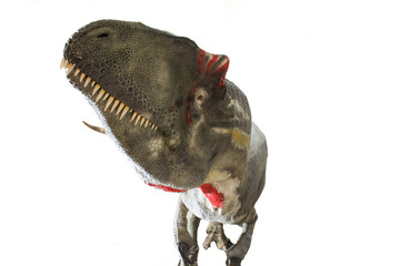 Allosaurus isolated on white background