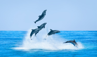 Tuinposter Dolfijn Group of dolphins jumping on the water - Beautiful seascape and blue sky