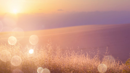 Art abstract  sunny meadow background