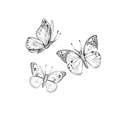 Spring, summer butterfly art. For tattoo, coloring book, t-shirt print, wadding invitation, mother s day card. Line sketch, floral illustration. Hand drawn vector silhouette graphic isolated on white