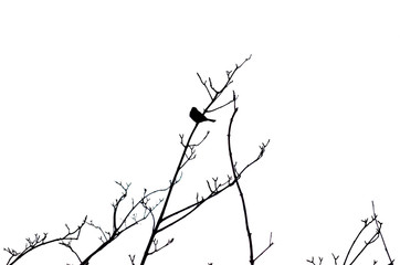 SMALL BIRD BLACK AND WHITE SILHOUETTE PERCHED ON TREE BRANCHES