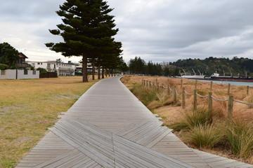 The empty path runs under the dark trees and through the beach grass in Gisborne, New Zealand.