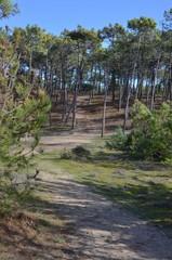 Bois des éloux, Noirmoutier en île, Vendée, France