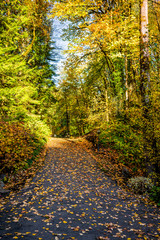 Yellow autumn park with road covered with fallen leaves