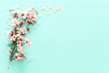 photo of spring white cherry blossom tree on pastel mint wooden background. View from above, flat lay Wall mural
