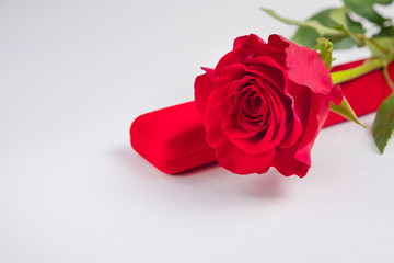 Red rose with gift box on a white background. concept: holiday, congratulations