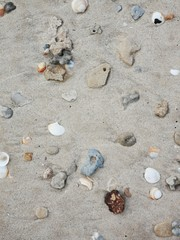 Shells And Stones on the sand