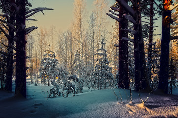 Trees are in the forest in winter under snow - landscape