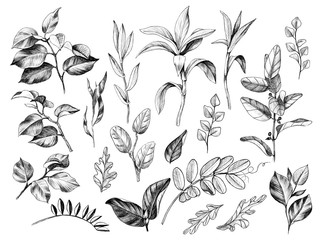 Hand Drawn Leaves and Branches of Wild Plants