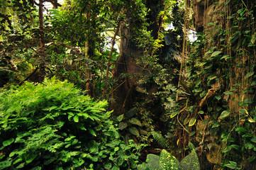 tropical tree, jungle