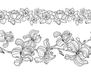 Vector set with floral seamless borders. Iris and narcissus flowers. Endless horizontal pattern brushes isolated on white. Black and white collection.