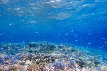 水中 サンゴ礁の海