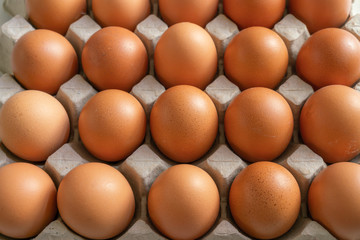 Eggs in the egg tray