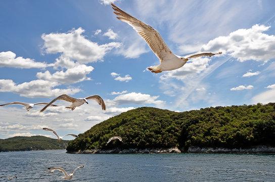 Magnificent Lim bay, Croatia