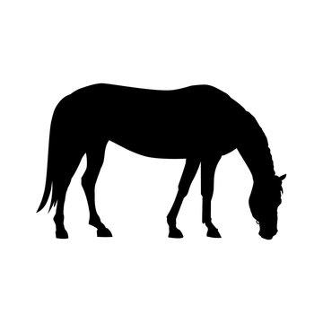 Grazing horse vector