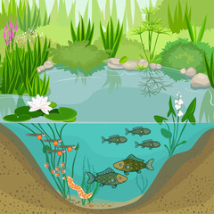 Pond ecosystem and life cycle of fish. Sequence of stages of development of fish from egg (roe) to adult animal