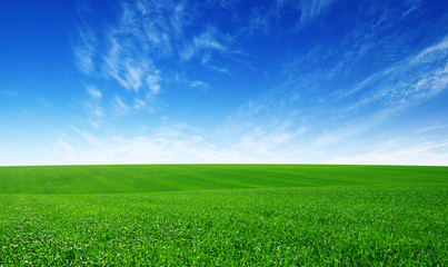 Green field and blue sky Wall mural