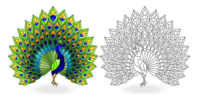 Set of stained glass elements with peacock birds, contour and color images, isolated on white background