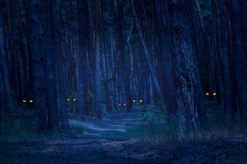 dark and scary night forest with tall pines and wild animals with bright orange eyes Wall mural