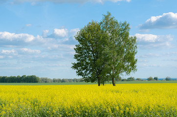 tree on a yellow field above the sky with clouds