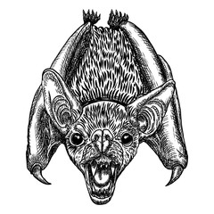 Bat drawing upside down. Gothic illustration of monsters for the Halloween. Witchcraft magic, occult attributes decorative elements. Drawing of night creatures. Flying aggressive vampire. Vector.