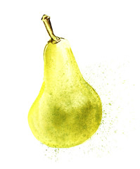 Yellow-green pear conference. Hand-drawn watercolor illustration