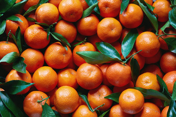 Fresh tangerines with stems and leaves, for sale at market.