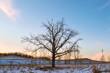 Bare tree, on a snow-covered landscape.