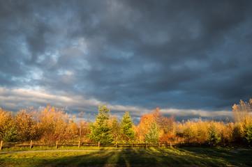 Sunshine and stormy skies