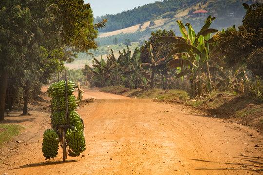 Bicycle of bananas on Uganda road Africa