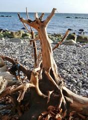 Baumrest ohne Rinde am Strand