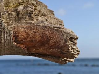 Alter Baum am sonnigen Strand