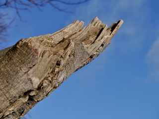 Abgebrochener Baumast vor Himmel