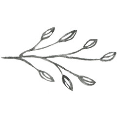 Line art of hand-drawn flora on the white isolated background. Flower pencil sketch.