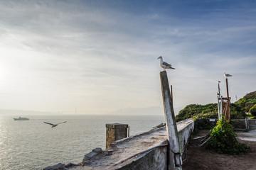 Sea Gulls on Alcatraz Island