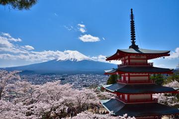 山梨 新倉山浅間公園の桜と富士山と五重塔