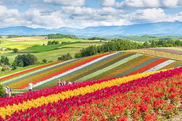 広大な花畑 / 北海道 美瑛町の観光イメージ