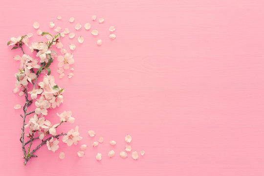 photo of spring white cherry blossom tree on pastel pink wooden background. View from above, flat lay