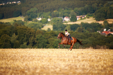 Horsewoman with horse galloping on a stubble field in summer photographed from the front from some...