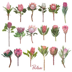 Hand drawn vector flower illustration