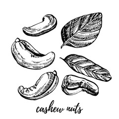 Cashew nuts sketch illustrations.Hand drawn illustrations isolated on white background.