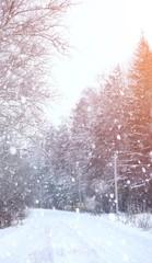 Winter landscape snow covered expanses. A park in the winter in the snow. Road on a winter day.