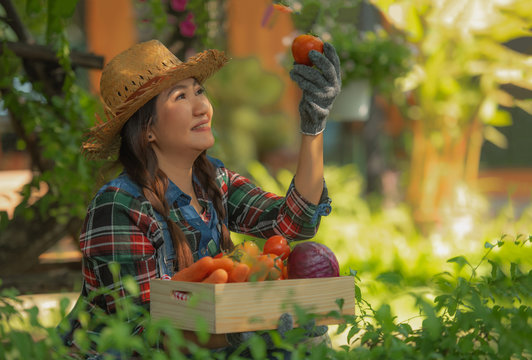 Happy female farmer holding basket of vegetables smiling sweetly showing tomatoes, Organic vegetable products grown in the backyard.