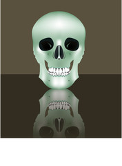 Human realistic skull in full face. Vector illustration