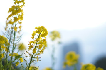 日本の春の花