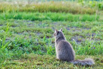 Gray street cat outdoor