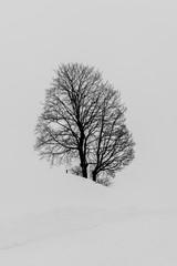 Baum in Schnee Landschaft im Winter
