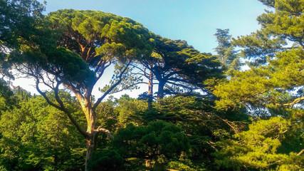 Crimea, green forest, beautiful nature